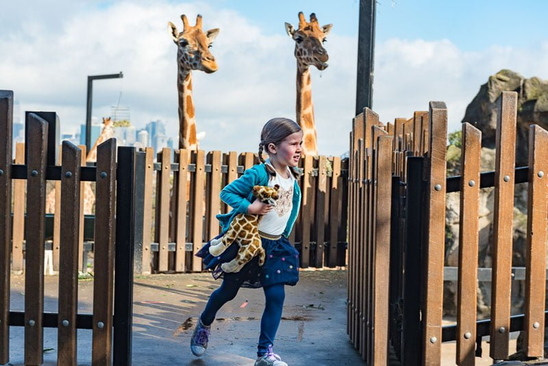 girl actress at Taronga Zoo with giraffes